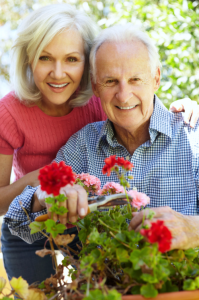 gardening-a-therapeutic-activity-for-older-individuals